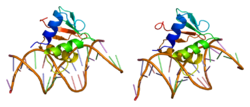 Protein SPI1 PDB 1pue.png