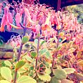Psychedelic Flowers.jpg