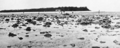Queensland State Archives 1003 Heron Reef Capricorn Group with Island in background c 1931.png