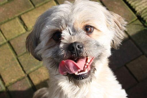 Quite the happy dog