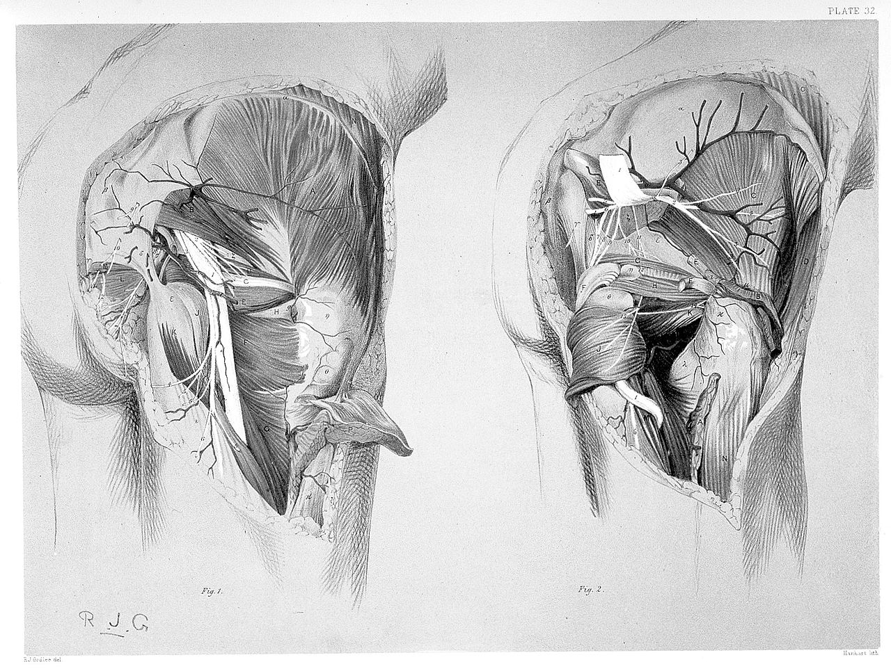 File:R. J. Godlee, An atlas of human anatomy Wellcome L0027628.jpg ...