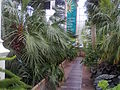 RBGE Palm House interior 04.jpg