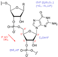 RNA chemical structure kn.png