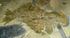 ROM-BurgessShale-CompleteAnomalocarisFossil.png