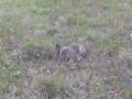 Rabbit-1.tiff