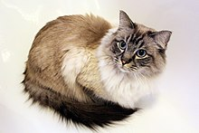 Are Long Haired Cats Worse For Allergies