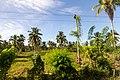 Rancho Español 32000, Dominican Republic - panoramio (5).jpg