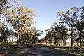 Rawsonville NSW 2830, Australia - panoramio (8).jpg