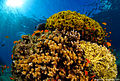 Red sea coral reef.jpg