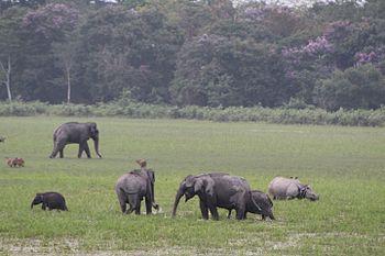 Rhiono and elephant.jpg