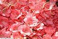 Rhododendron Blaauws Pink 0zz.jpg