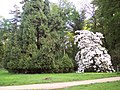 Rhododendrons near Heaven's Gate - geograph.org.uk - 445137.jpg