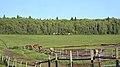 Riding Mountain National Park, Onanole - panoramio.jpg