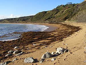 High water mark - The strandline at Ringstead Beach, Dorset, United Kingdom