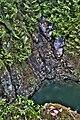 River Capilano Park Vancouver British Columbia Canada 01.jpg