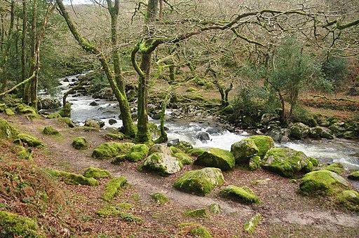 River Plym in Dewerstone Wood (9464)