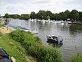 River Thames at Hampton Court Bridge - geograph.org.uk - 927506.jpg