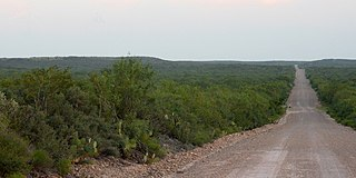 Tamaulipan mezquital Xeric shrublands ecoregion in Mexico and the United States