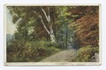 Road through the Forest (Berkshires), Scenic (NYPL b12647398-74019).tiff