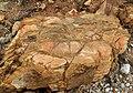 Rock (39236133794).jpg