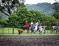 Rodeo Event Calf Roping 15.jpg