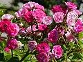 """Rosa """"Dinky"""" o VELheav. 05.jpg"""
