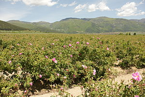 Geography of Bulgaria - The Rose Valley