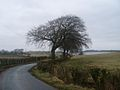 Row of trees by Balgraystone Road - geograph.org.uk - 1777317.jpg