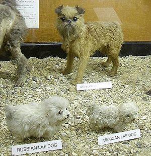 Natural History Museum at Tring - Image: Russmexlapdog