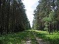 Südheide track nr Wolthausen.jpg