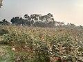 Sadullapur Flower Garden in 2020.08.jpg