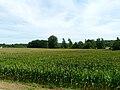 Saint-Pantaly-d'Ans maïs.JPG