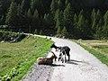 Sambuco, Strasse zum Lago del Naret - panoramio.jpg
