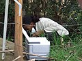 Sampling of greywater treatment system (4634602595).jpg
