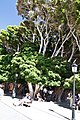 San Sebastián de La Gomera, Santa Cruz de Tenerife, Spain - panoramio (32).jpg