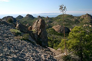 California protected areas -  Yucca plant near coast of Santa Monica Mountains National Recreation Area