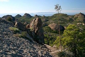 California protected areas - Yucca plant near coast of Santa Monica Mountains National Recreation Area