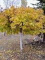 Saratov, Victory Park - panoramio (9).jpg
