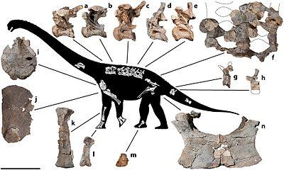 Savannasaurus skeleton.jpg