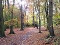 Scholes Wood - geograph.org.uk - 336839.jpg