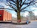 Schule Altengamme (4) Schiller-Eiche mit Stein.jpg
