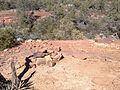 Secret Canyon Trail, Sedona, Arizona - panoramio (36).jpg