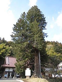 Sekiunji Koyamaki, Osaki.jpg