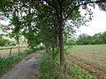 Selo Radiovce-Tetovsko (197).JPG
