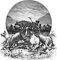 Seven Years in South Africa, page 302, hyaenas among the cattle.jpg