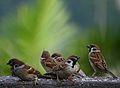 Seven sparrows.jpg
