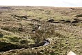 Sheep Fold and Old Mine Workings - geograph.org.uk - 342164.jpg