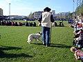 Shepherd dog show 0001 catalonia.jpg
