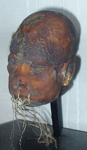 Shrunken head - Shrunken head exhibited at the Lightner Museum in St. Augustine, Florida.