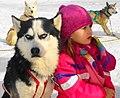 Sibirische Huskies.jpg